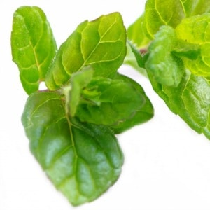 Peppermint Oil Leaves 300px