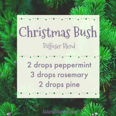 christmas bush diffuser blend