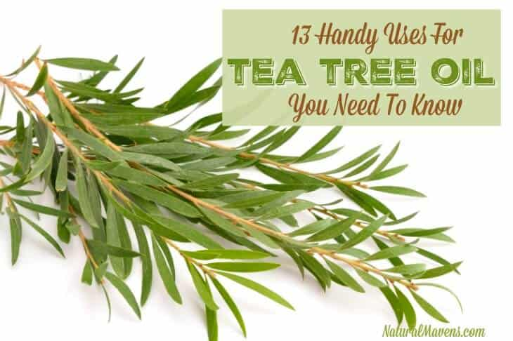 13 Handy Uses for Tea Tree Oil You Need to Know