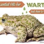 Best Essential Oils for Warts and How to Use Them